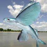 Zdjęcie profilowe Latajaca ryba